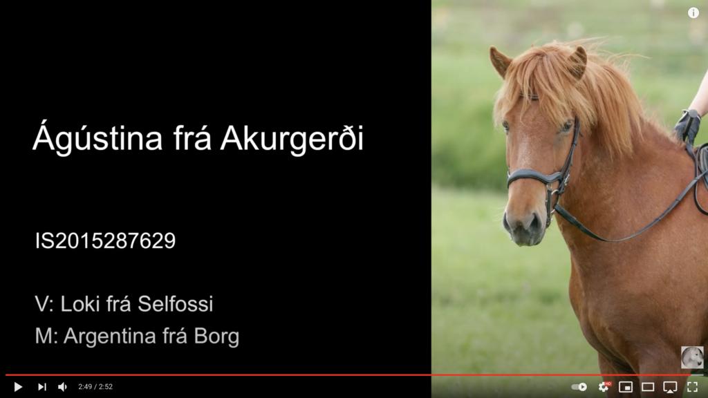Ágústina frá Akurgerði